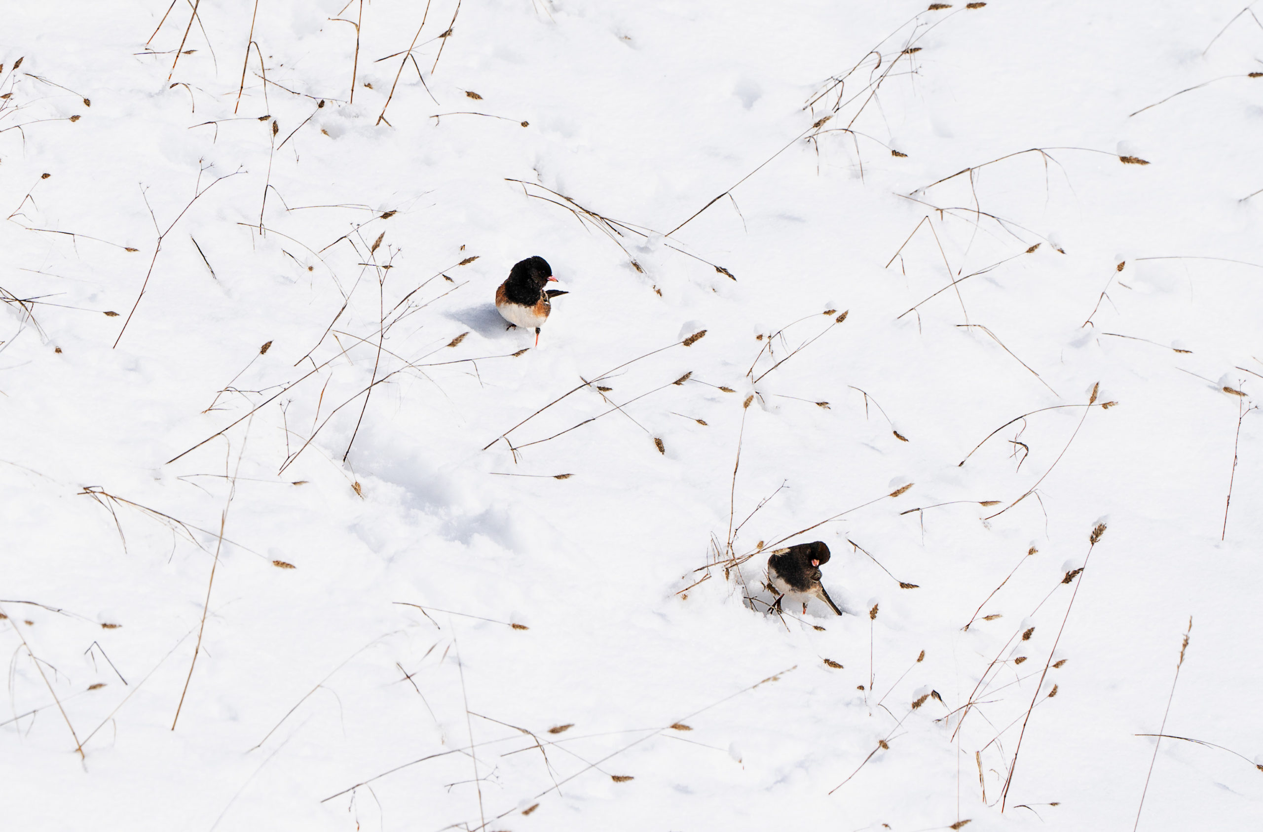 Two Little Birds, Each on my doorstep