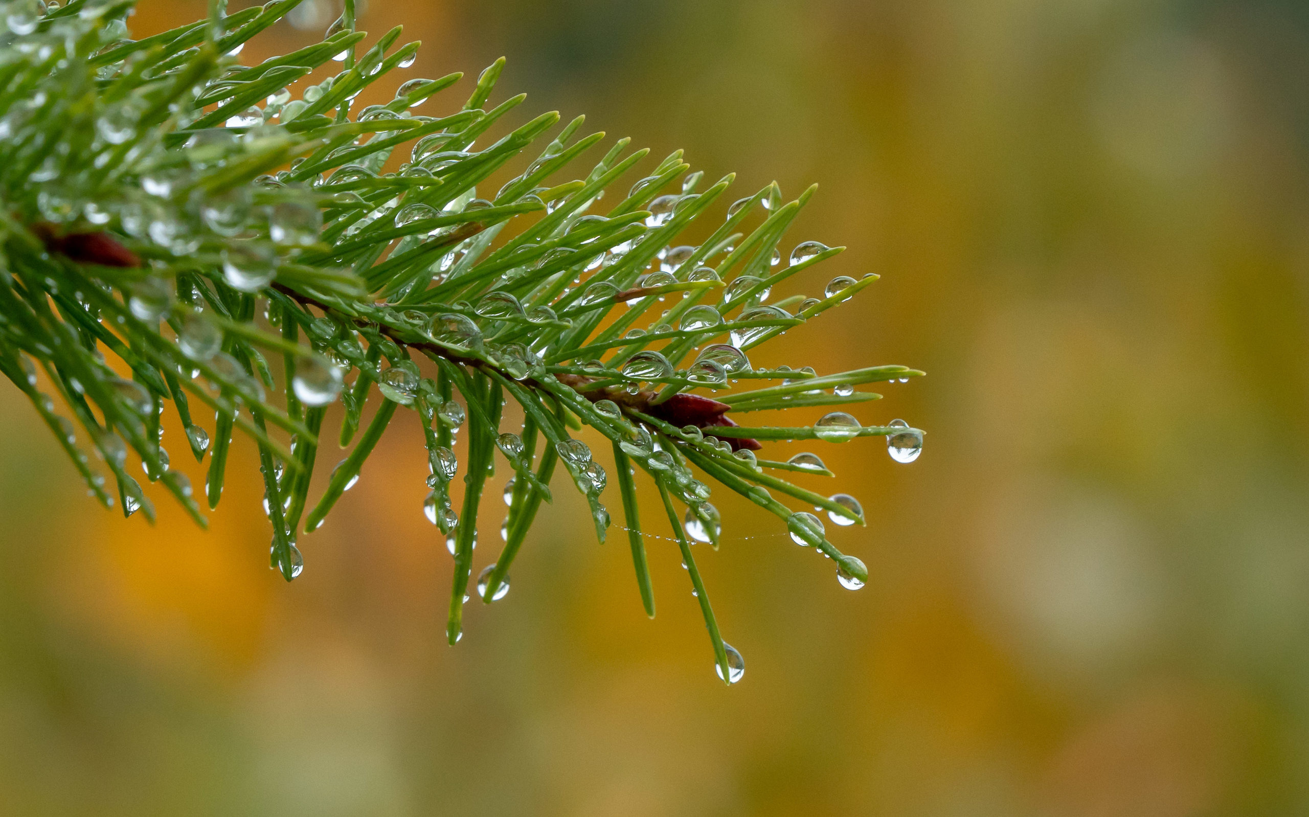 Drip Drops of Fall