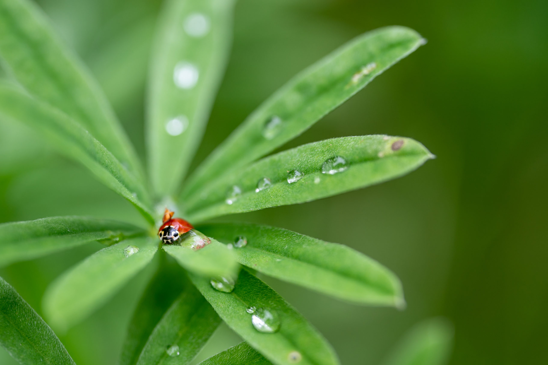Bug Lady