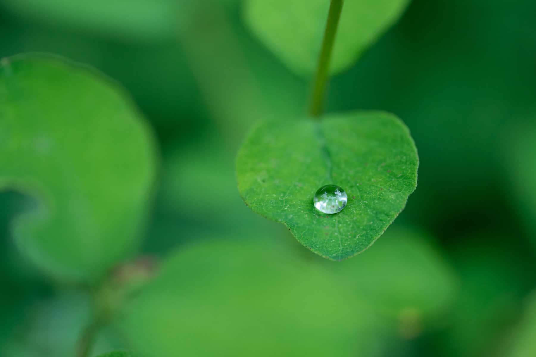 Love Droplets