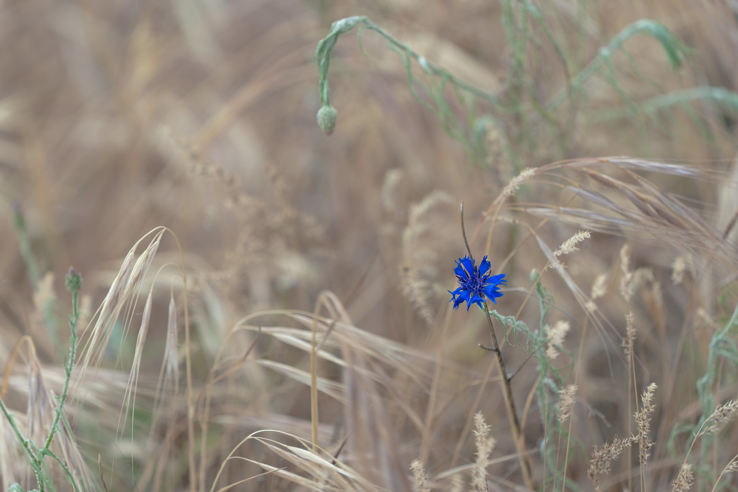 Flower in the rough.