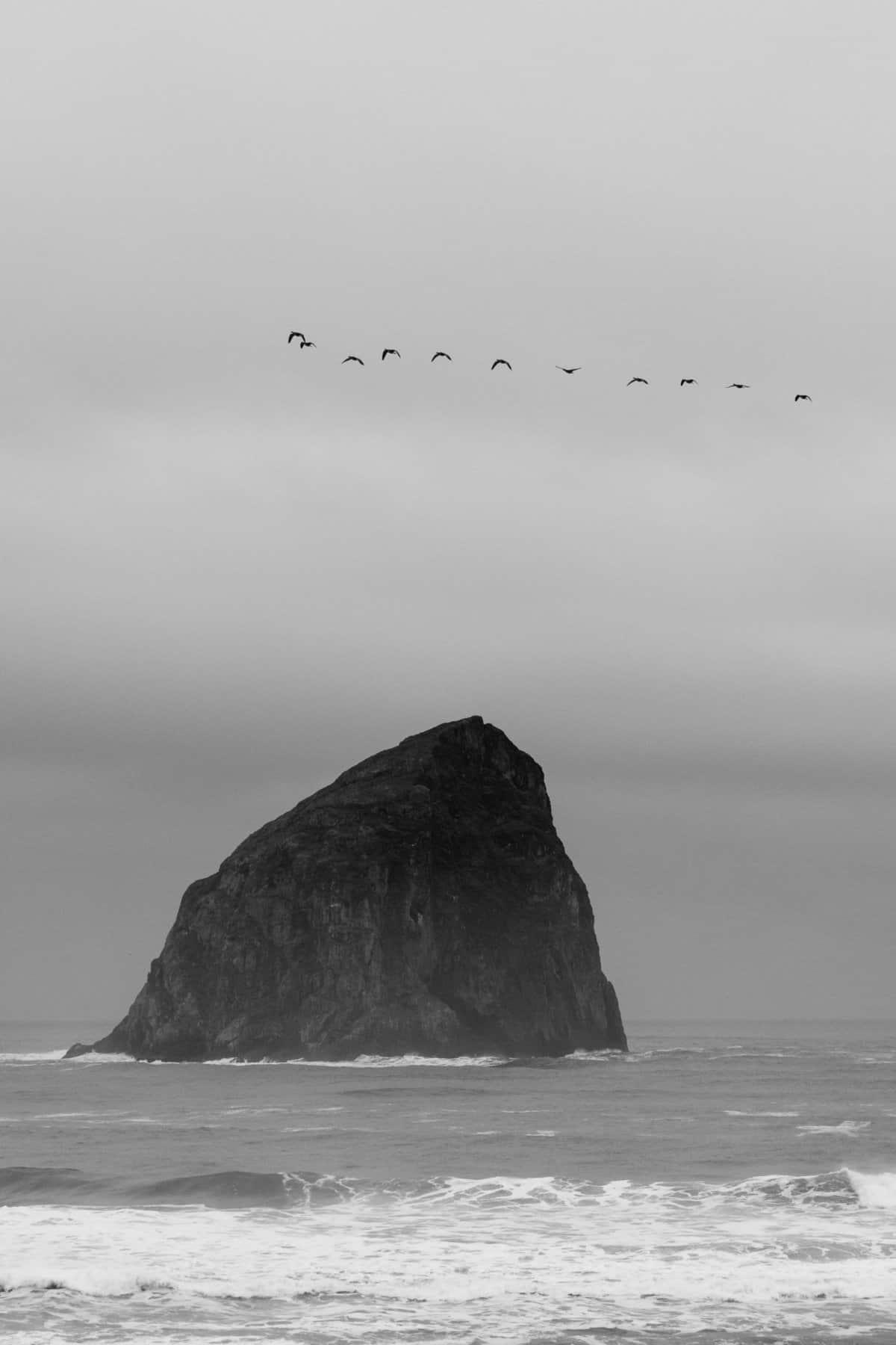 Haystack Rock Flock