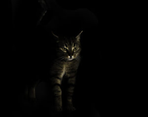 Cat standing in the dark and barely lit up